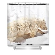 Walk The Right Path Shower Curtain