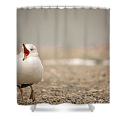 Walking And Talking Shower Curtain