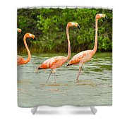 Walking Flamingos Shower Curtain
