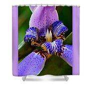 Walking Iris With Purple Border Shower Curtain