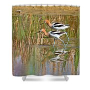 Walking My Baby Back Home Shower Curtain