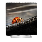 Walking On Edge Shower Curtain