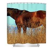 Walking Tall Shower Curtain by Karen Wiles