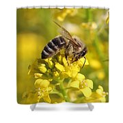Wall Flower Pollen Shower Curtain