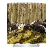 Wall Of Aspens  Shower Curtain