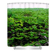Wall Of Ivy Shower Curtain