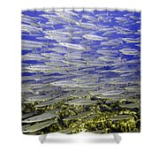 Wall Of Silver Fish Shower Curtain