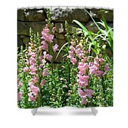Wall Of Snapdragons Shower Curtain
