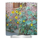 Wall Of Sunflowers 1 Shower Curtain