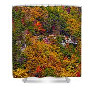 Wall Of Trees Shower Curtain