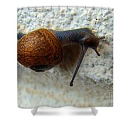 Wall Snail 1 Shower Curtain