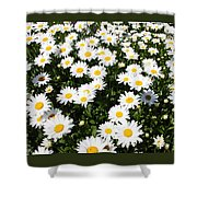 Wall To Wall Daisies Shower Curtain