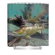 Walleye And Dardevle Shower Curtain