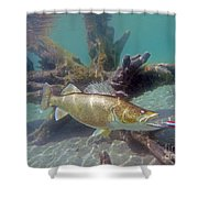 Walleye Pike And Dardevle Shower Curtain