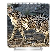 Wandering Cheetah Shower Curtain