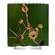 Wandering Violin Mantis Shower Curtain