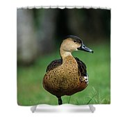 Wandering Whistling Duck Shower Curtain