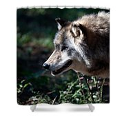 Wandering Wolf Shower Curtain