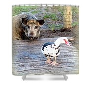 The Pig Want To Be Your Friend, Mr Duck  Shower Curtain