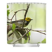 Warbler - Black-throated Green  Shower Curtain
