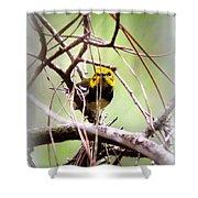 Warbler - Black-throated Green Warbler Shower Curtain