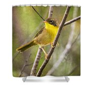 Warbler In Sunlight Shower Curtain