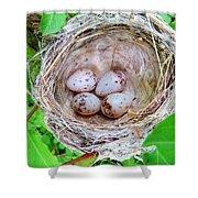 Warbler Nest Shower Curtain