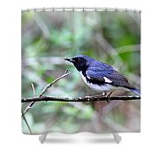 Warbler With Lunch Shower Curtain