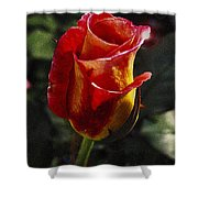Warm Colored Rosebud  Shower Curtain