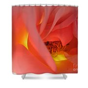 Warm Glow Pink Rose 2 Shower Curtain