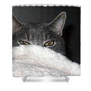 Warm Kitty Shower Curtain