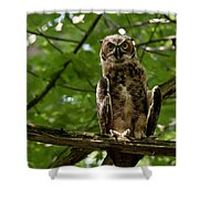 Warm Young Great Horned Owl Shower Curtain