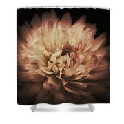 Warmth Of A Dahlia Shower Curtain