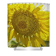 Warmth Upon My Back - Sunflower Shower Curtain