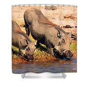 Warthog Family Shower Curtain
