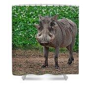 Warthog Stance Shower Curtain