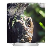 Warty Tree Frog Shower Curtain