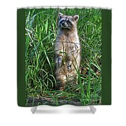 Wary Shower Curtain