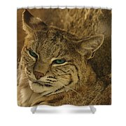 Wary Bobcat Shower Curtain by Penny Lisowski