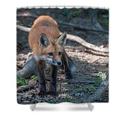 Wary Fox Shower Curtain by Bianca Nadeau