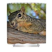 Wary Squirrel Shower Curtain