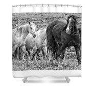 Wary Stallion Shower Curtain