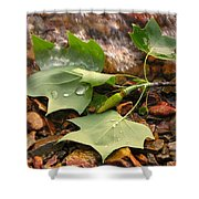 Washed Up Leaves Shower Curtain