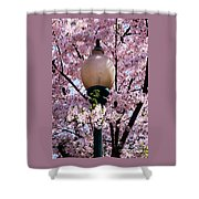 Washington Cherry Blossoms And A Lantern Shower Curtain