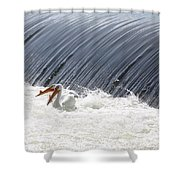Washington White Pelicans Shower Curtain