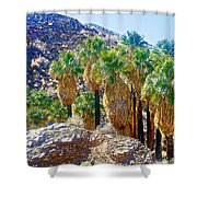 Washingtonian Fan Palm Grove Along Lower Palm Canyon Trail Near Palm Springs-california  Shower Curtain