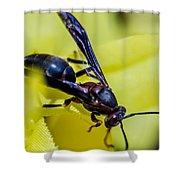 Wasp Shower Curtain