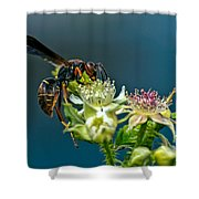Wasp Shower Curtain