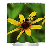 Wasp On A Susan Shower Curtain