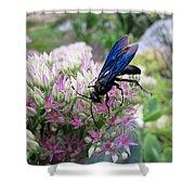Wasp On Sedum Shower Curtain